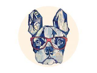 Franse bulldog in het blauw