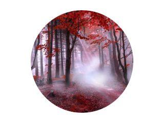 Mystiek rood bos