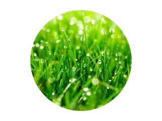 groen gras met waterdruppels close-up in zonlicht achtergrond