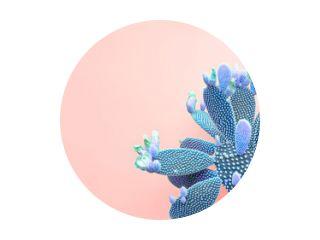 Trendy tropische groene neoncactus op koraalkleurige achtergrond. Mode Minimal Art Concept. Creatieve stijl. Cactussen kleurrijke modieuze stemming
