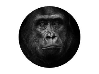 Zwart-witte gorilla