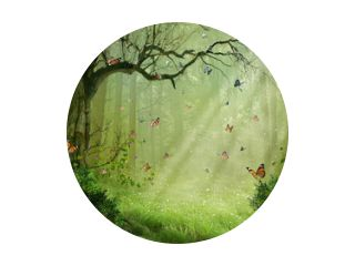 Magisch bos. Fotomanipulatie. 3D-weergave.