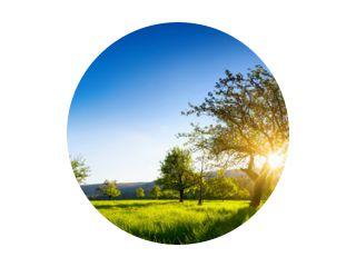 De zon schijnt door een boom op een groene weide, een panoramisch levendig landelijk landschap met heldere blauwe lucht voor zonsondergang