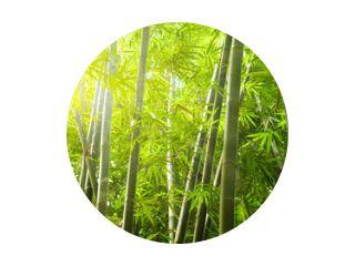bamboebos met lichtstraal