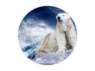 Witte ijsbeerjager op het ijs in waterdruppels.