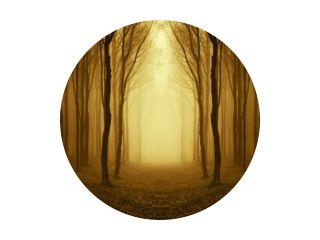 pad door een gouden bos bij zonsopgang