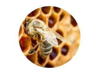 Close up van bijen in een bijenkorf op honingraat