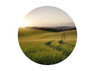 Zomerlandschapsbeeld van tarweveld bij zonsondergang met prachtige l
