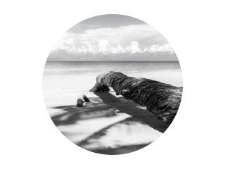 Omgevallen palmboom in zwart-wit