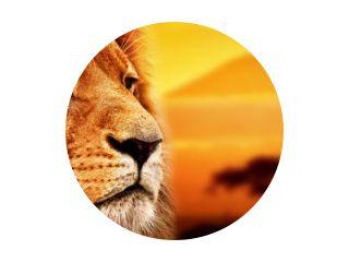 Leeuwenportret op savanne. Mount Kilimanjaro bij zonsondergang. Safari