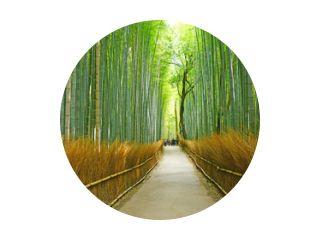 bamboe groef