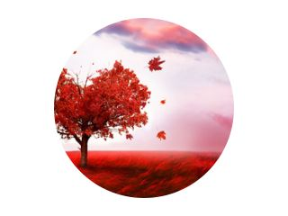 Herfstlandschap met hartvormige boom