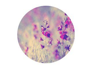 paarse wilde bloemen