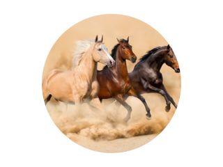 Drie paarden rennen in woestijnzandstorm