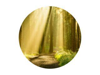 Gouden lichtstralen schijnen door boomluifels op een herfstochtend met pad in een bos.