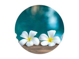 Tropische frangipani witte bloem in de buurt van het zwembad, flower spa. Ruimte kopiëren.