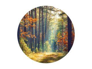 Herfst bos natuur. Levendige ochtend in kleurrijk bos met zonnestralen door takken van bomen. Landschap van de natuur met zonlicht.