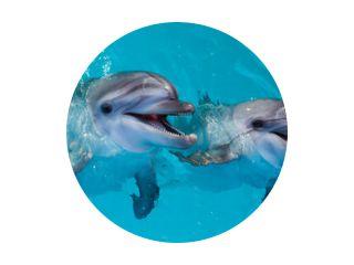 Groep schattige slimme dolfijnen in de oceaan