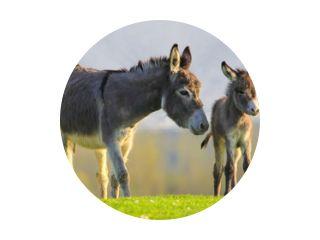 Schattige baby ezel en moeder op bloemenweide