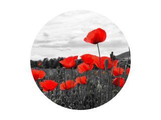 Lef mooie papavers op zwart-witte achtergrond. Bloemen Rode papavers bloeien op wild veld. Mooie veld rode papavers met selectieve focus. Rode klaprozen in zacht licht