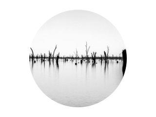 Foto van dode boomstammen die uit het water steken, Australië