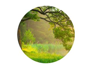 Zomer groen landschap