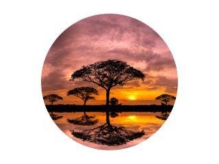 Panorama silhouet boom en berg met zonsondergang. Boom aftekenen tegen een ondergaande zon reflectie op water. Typische Afrikaanse zonsondergang met acaciabomen in Masai Mara, Kenia.