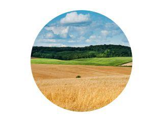 groot panoramisch uitzicht op het landschap van tarweveld, oren en gele en groene heuvels