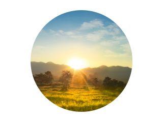 Zonsondergang over uitgestrekt bloeiend weidelandschap