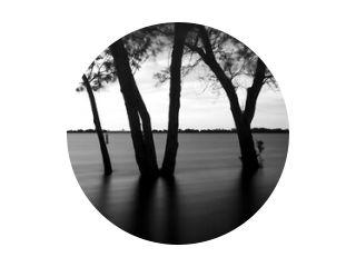 silhouet van een boom, lange sluitertijd, zwart-wit, zwart-wit