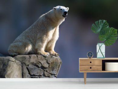 polar bear sitting on a rock