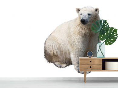 Seated polar bear