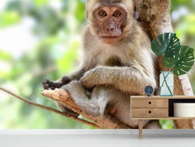 Young monkey