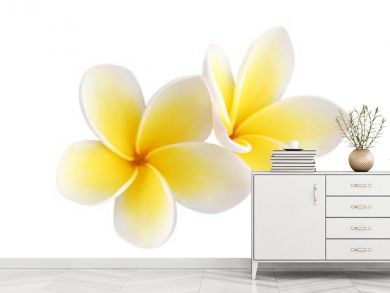 Two frangipani flowers isolated on white