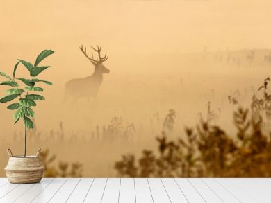 Red deer with big antlers stands on meadow on foggy morning
