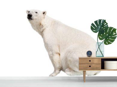 White polar bear.
