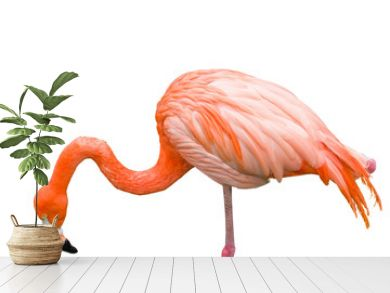 Close up of pink flamingo bird isolated on white