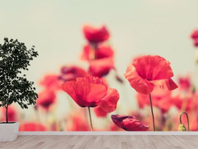 Poppy flowers retro peaceful summer background