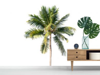 Natural photo of coconut tree isolated on white
