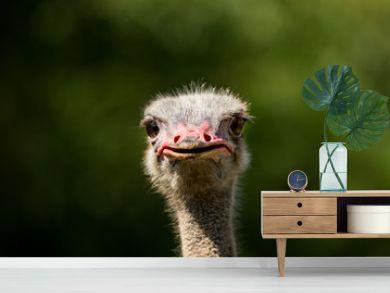 close up ostrich head focus on bill against green blur background