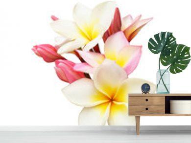 Tropical frangipani flower isolated on white background