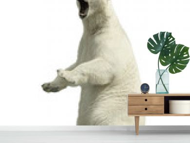 Standing polar bear with an open mouth Isolated over white background