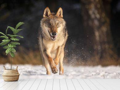 Wolf im Schnee