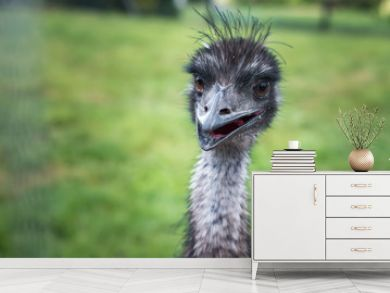 close-up head of an ostrich with an open beak