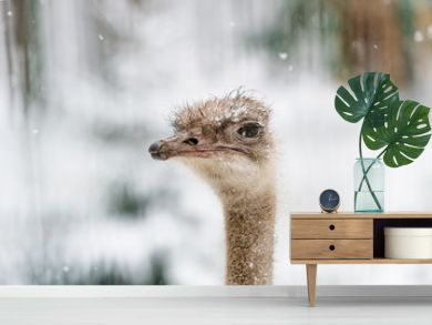 The head of an ostrich on a winter background