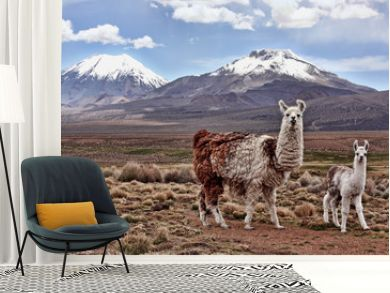 A bably llama and it's mother look into the lens with a mountain in the background on the Bolivian Altiplano