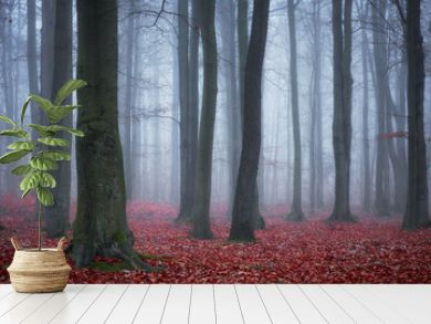 Dark forest covered with fog