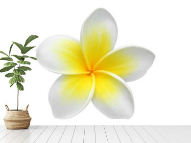 Frangipani(plumeria) flower isolated on white