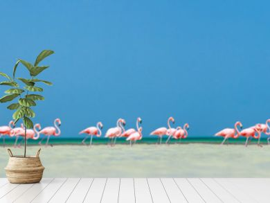 Pink flamingos panorama
