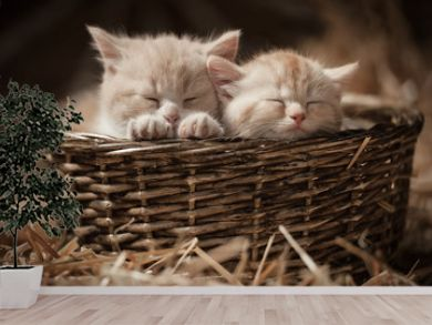 Two kittens sleeping in a basket on hay in the barn